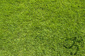 Sport soccer on green grass texture and background — Stock Photo