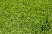 Sport judo on green grass texture and background — Stock Photo