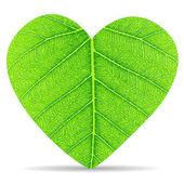 Kalp yeşil yaprakları — Stok Vektör