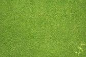 Ikona dolaru na zelené trávě pozadí — Stock fotografie