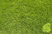 Leaf with heart icon on green grass — Stock Photo