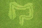 Intestine icon on green grass texture and background — Stock Photo