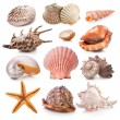 Seashell collection — Stock Photo #13359007