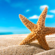 Fishstar on the beach - Stock Photo