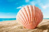 Coquille sur la plage — Photo
