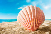 在海滩上的贝壳 — 图库照片