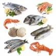 Fish collection — Stock Photo #13760496