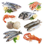 Raccolta di pesci — Foto Stock