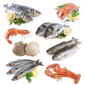 Kolekcja ryb — Zdjęcie stockowe