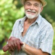 Senior gardener with a spade - Stock Photo
