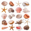 Seashell collection - Stock Photo
