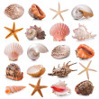 Seashell Kollektion — Stockfoto