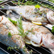 Grilled sea bream — Stock Photo