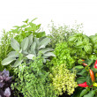 Stock Photo: Fresh kitchen herbs
