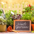 Stock Photo: Herb garten