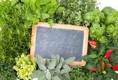 Hierbas de la cocina fresca — Foto de Stock