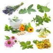 Stock Photo: Collection of fresh medicinal herb