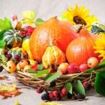 Harvesting arrangement of pumpkins — Stock Photo #33699039