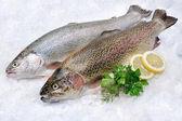 Rainbow trout on ice — Stock Photo