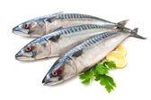 Mackerel Fish — Stock Photo