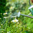 Watering flowers — Stock Photo #38840989