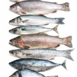 Sea fish collection — Stock Photo