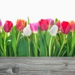 Spring tulips flowers — Stock Photo #41868721