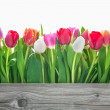 Spring tulips flowers — Stockfoto