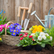 Gardener planting flowers — Stock Photo #42179971