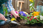 Jardinero plantando flores — Foto de Stock