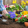Gardener planting flowers — Stock Photo #42796365