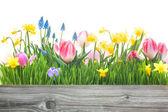 Spring flowers — Stock fotografie
