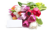 Fresh tulips and tag — Stock Photo