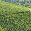 Stock Photo: Vineyard landscape #2, Stuttgart