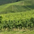 Stock Photo: Vineyard landscape #4, Stuttgart