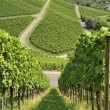 Hilly vineyard #17, Stuttgart — Stock Photo