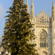 Stock Photo: Christmas Tree and Minster, Milan