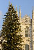 Christmas Tree and Minster, Milan — Stock Photo