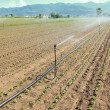 Irrigation of vegetable field — Stock Photo #12080812