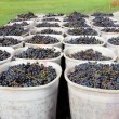 Baskets of Grapes — Stock Photo #12080848