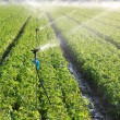 Stock Photo: Irrigation on farm field