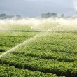 Farm background, irrigation system - Stock Photo