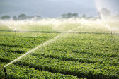 Farm background, irrigation system — Stock Photo