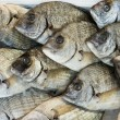Giltheads bream fish at the market — Stock fotografie