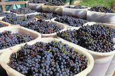 Baskets of wine grapes — Foto Stock