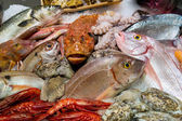 Fish and seafood — Stock Photo