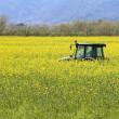 Tractor inside yellow canola field - Stock Photo