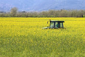 Tractor inside yellow canola field — Stock Photo
