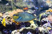 Tropische fische — Stockfoto