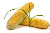 Isolated corn and sprout — Stock Photo
